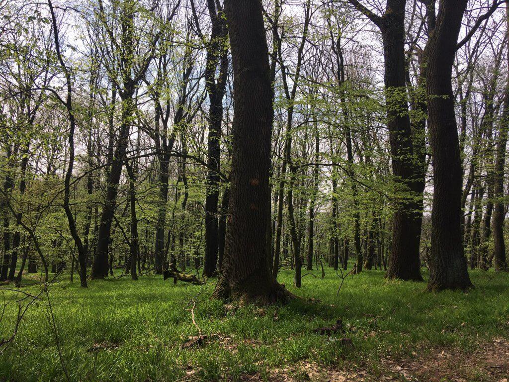 Lesná cesta ku Katarínke